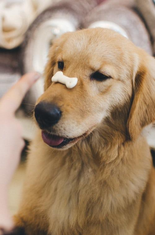Hrana za psa narejena iz kakovostnega in svežega mesa